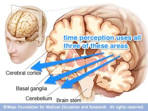 brain_time