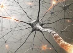 neurons-92036744